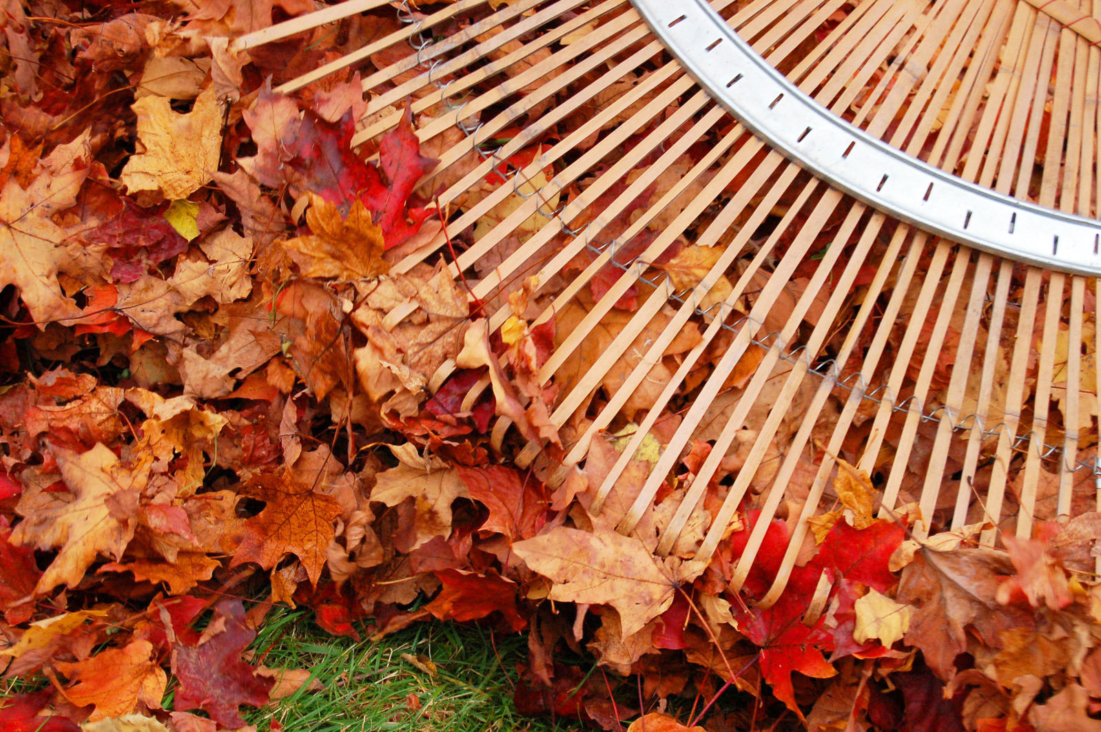 Fall Lawn Care: Clean up leaves on your lawn in Fall.