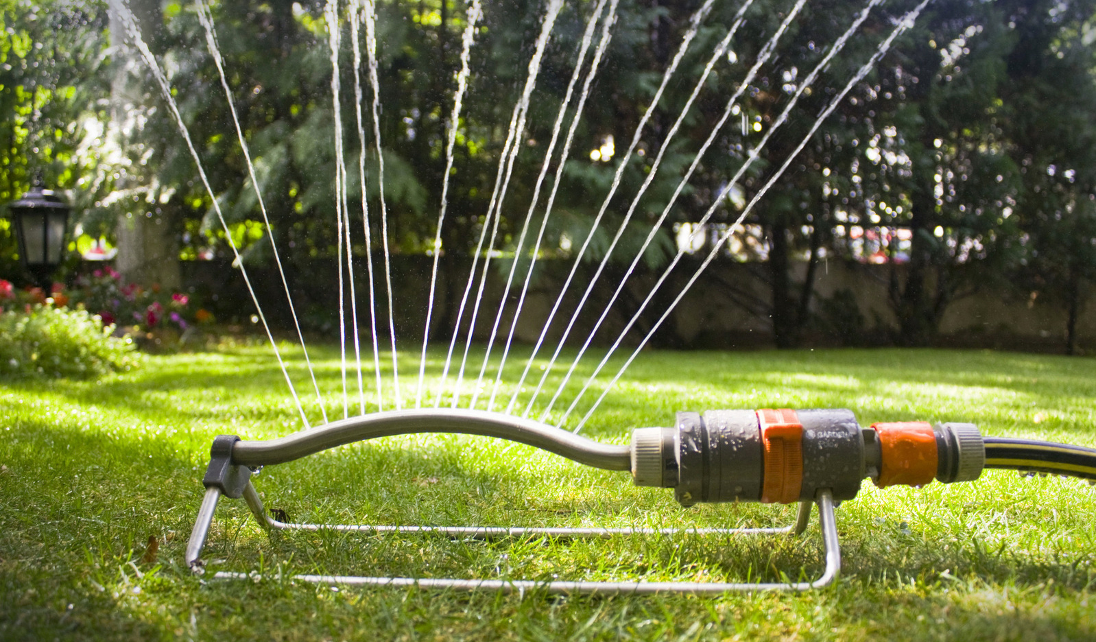 Summer Lawn Care: Grass needs water in the hot summer